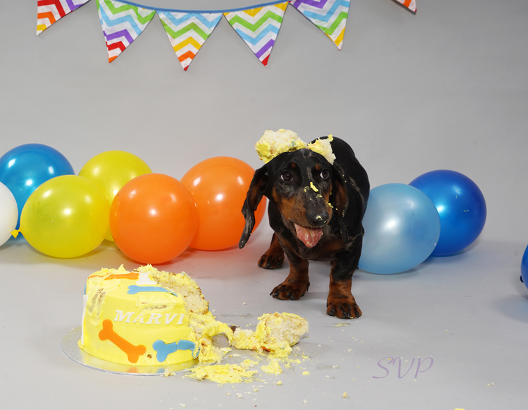 Dog Cake Smash, Puppy Cake Smash