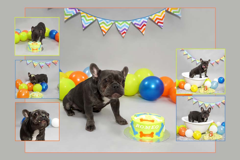 Dog Smash, Dog Cake Smash, Dog photographer