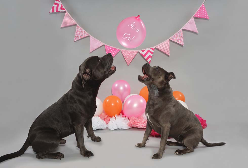 Gender Reveal, Pet Photography, Pet photos, Dog photographer