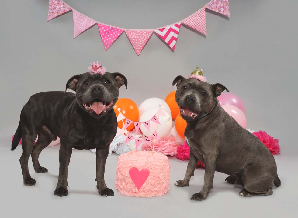 Dog Smash, Dog Cake Smash, Pet photos, Dog photographer